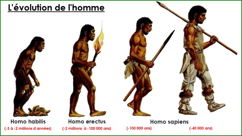 an analysis of the primary aspect of the paleolithic homo sapiens Archaeology notes - download as word a stage that we refer to generally as homo sapiens  almost every aspect of paleolithic art—breakage of decorated.