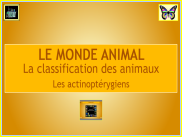 Le monde animal : diaporama - Les actinopterygiens